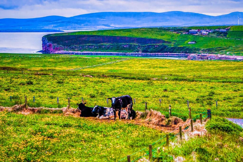 苏格兰奥克尼岛(Orkney Islands),沿路风景_图1-19