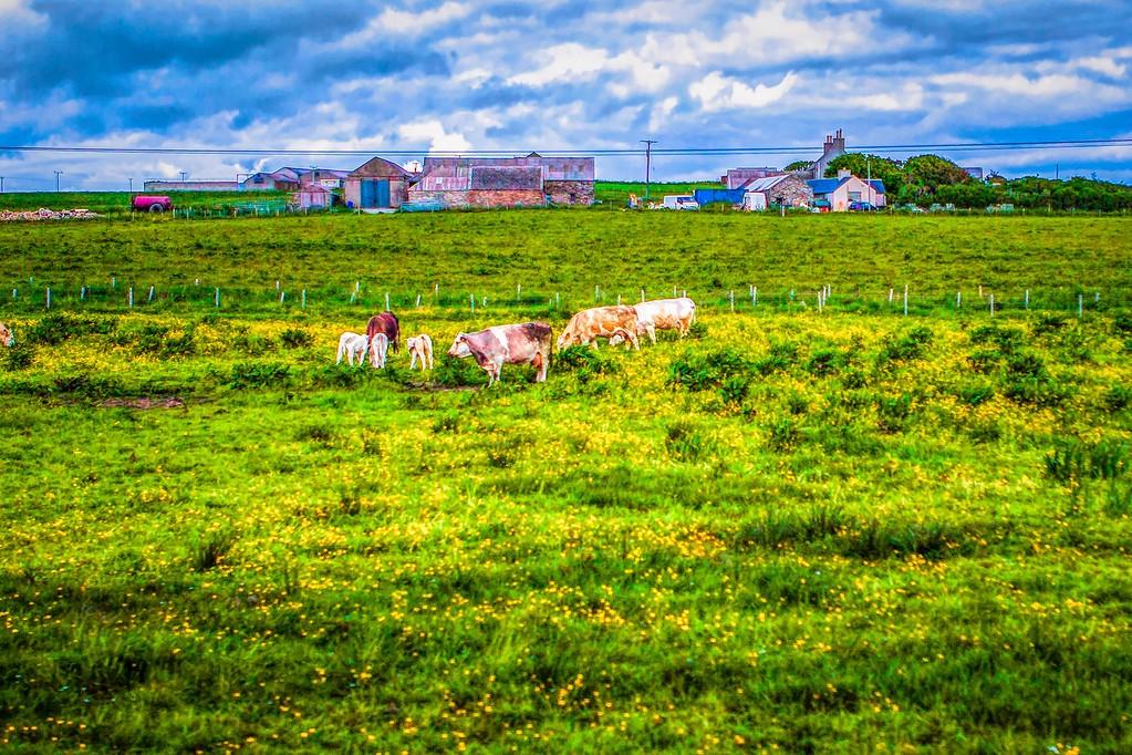 苏格兰奥克尼岛(Orkney Islands),沿路风景_图1-29