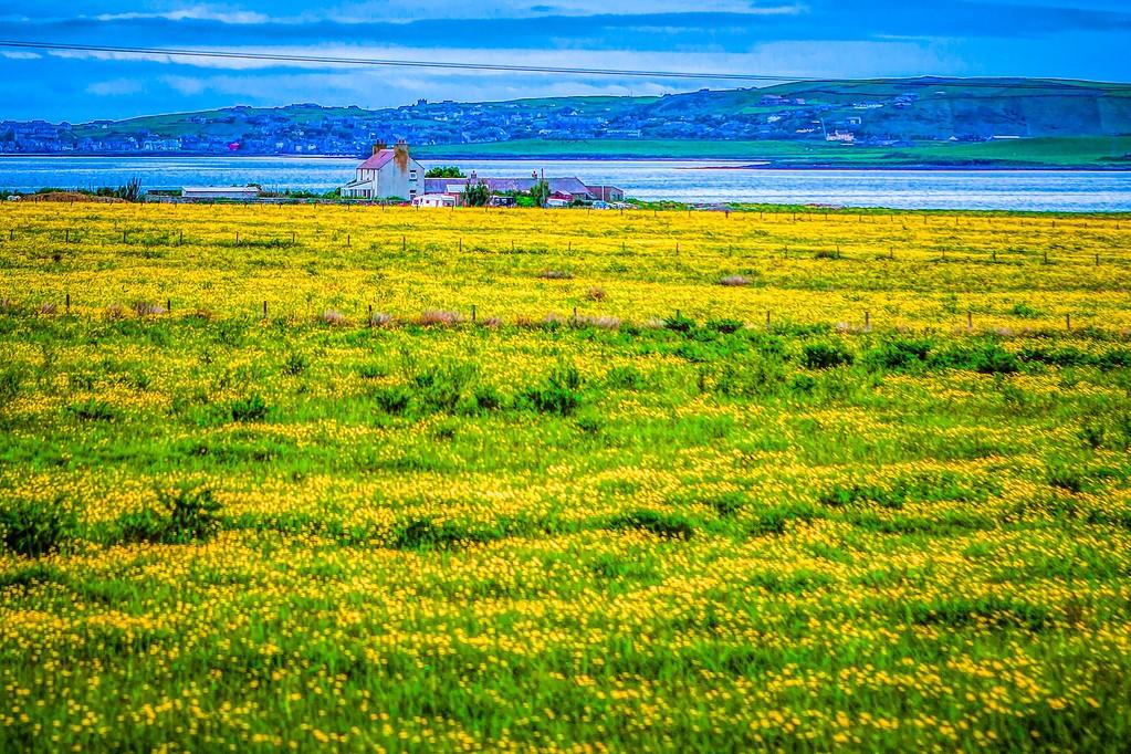 苏格兰奥克尼岛(Orkney Islands),沿路风景_图1-25