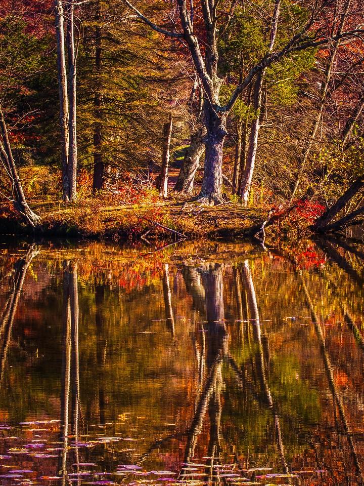 宾州 French Creek State Park,秋影秋色_图1-3