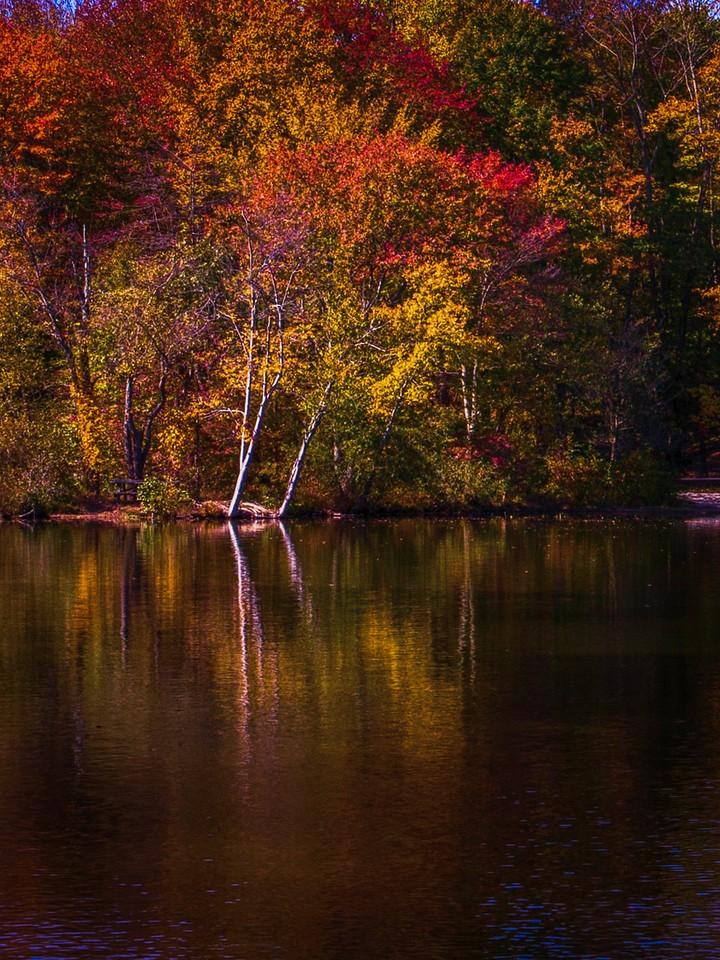 宾州 French Creek State Park,秋影秋色_图1-6