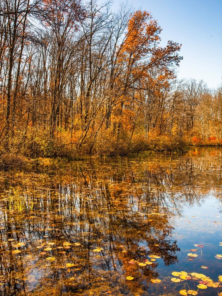 宾州 French Creek State Park,秋影秋色_图1-7