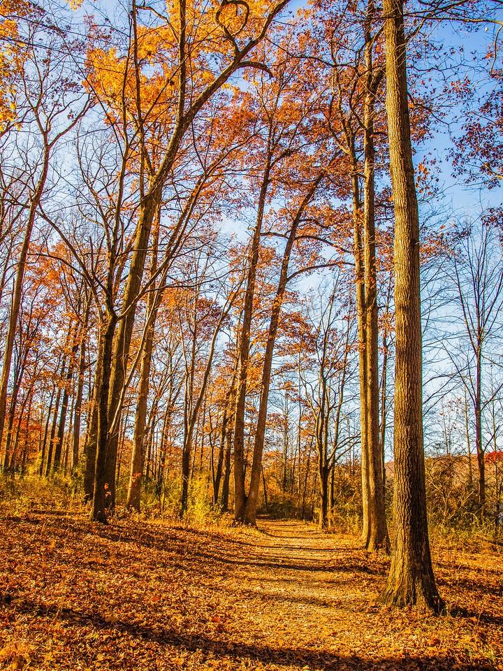 宾州 French Creek State Park,秋影秋色_图1-21