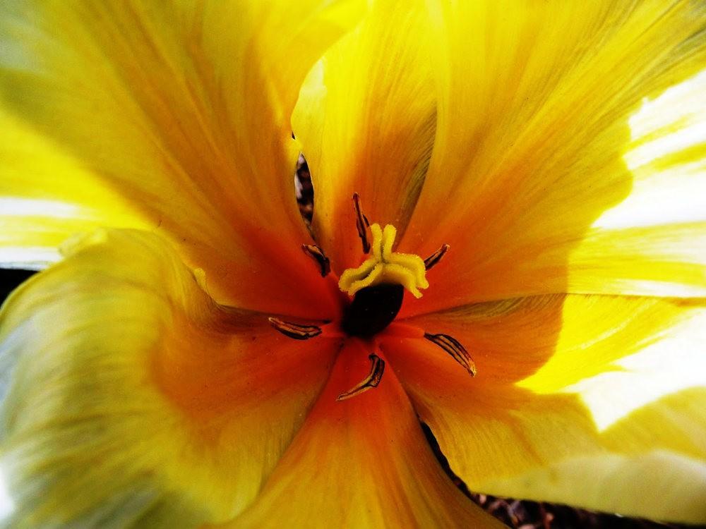 春在邱园_图1-1