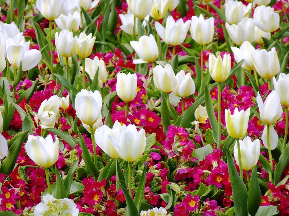 春在邱园_图1-3