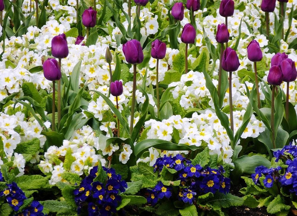 春在邱园_图1-4