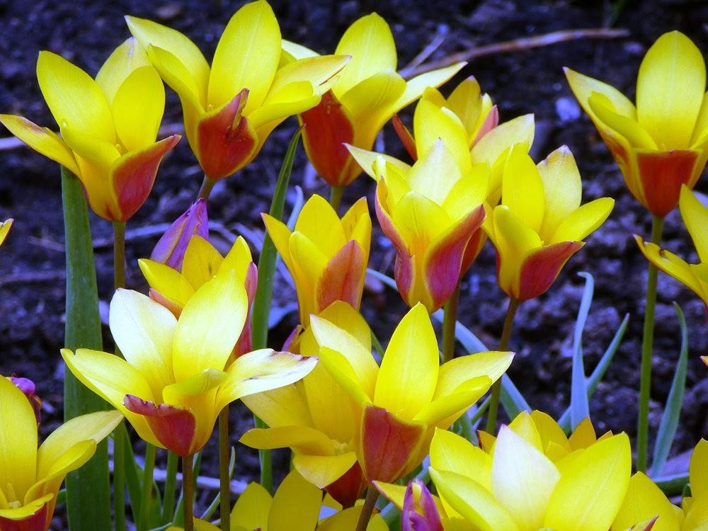 春在邱园_图1-8