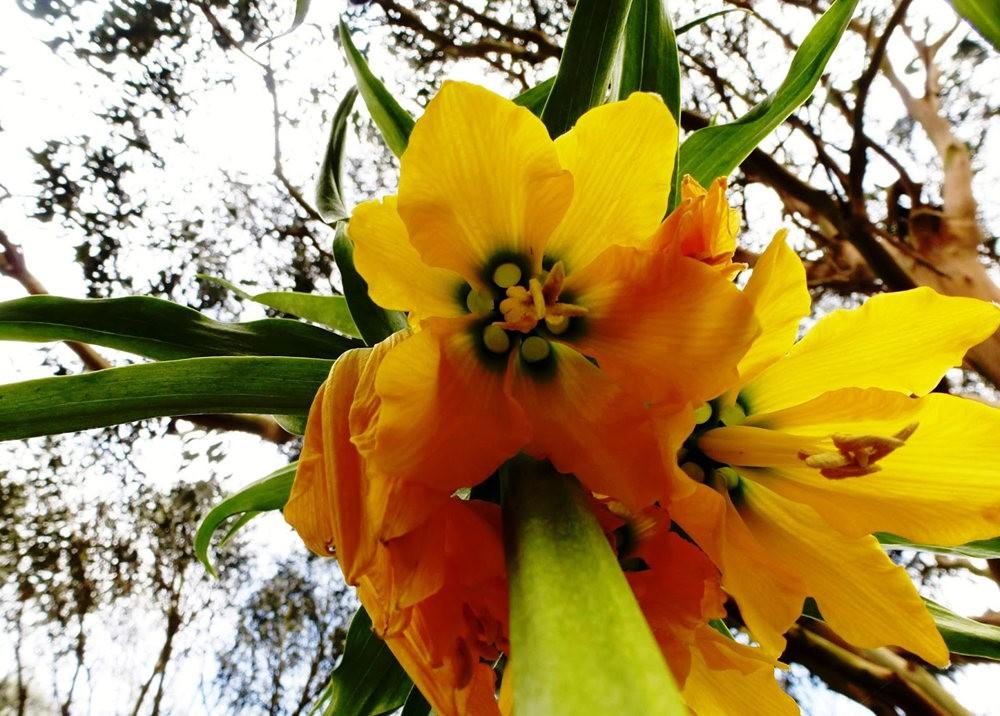 春在邱园_图1-11
