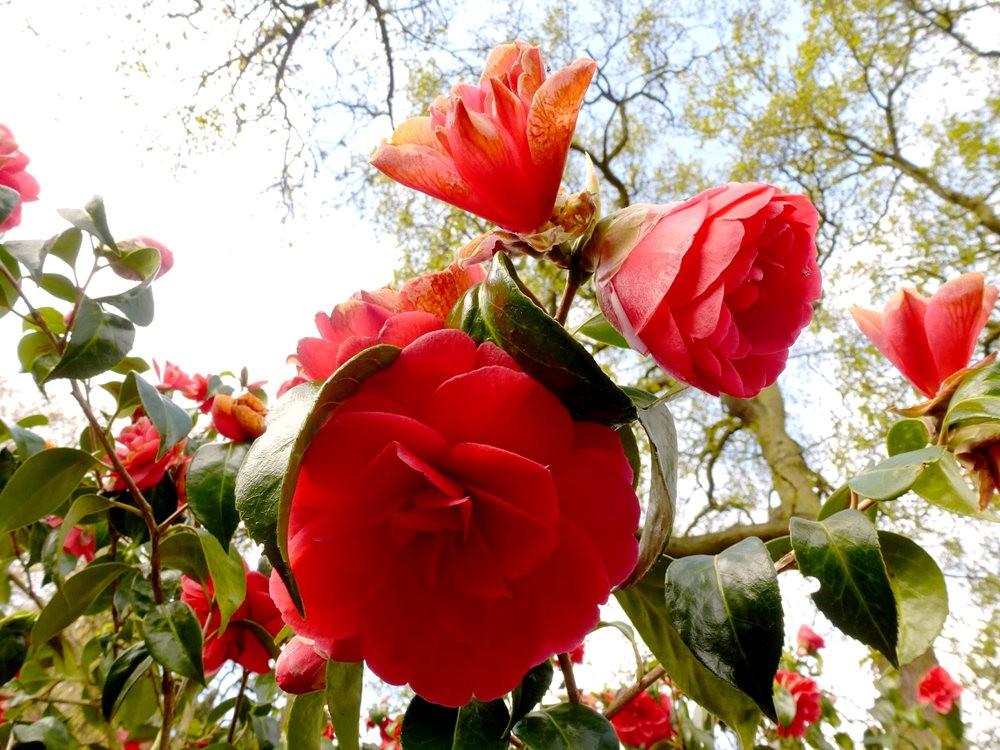 春在邱园_图1-12