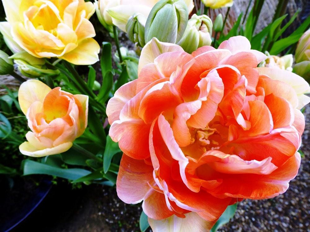 春在邱园_图1-13