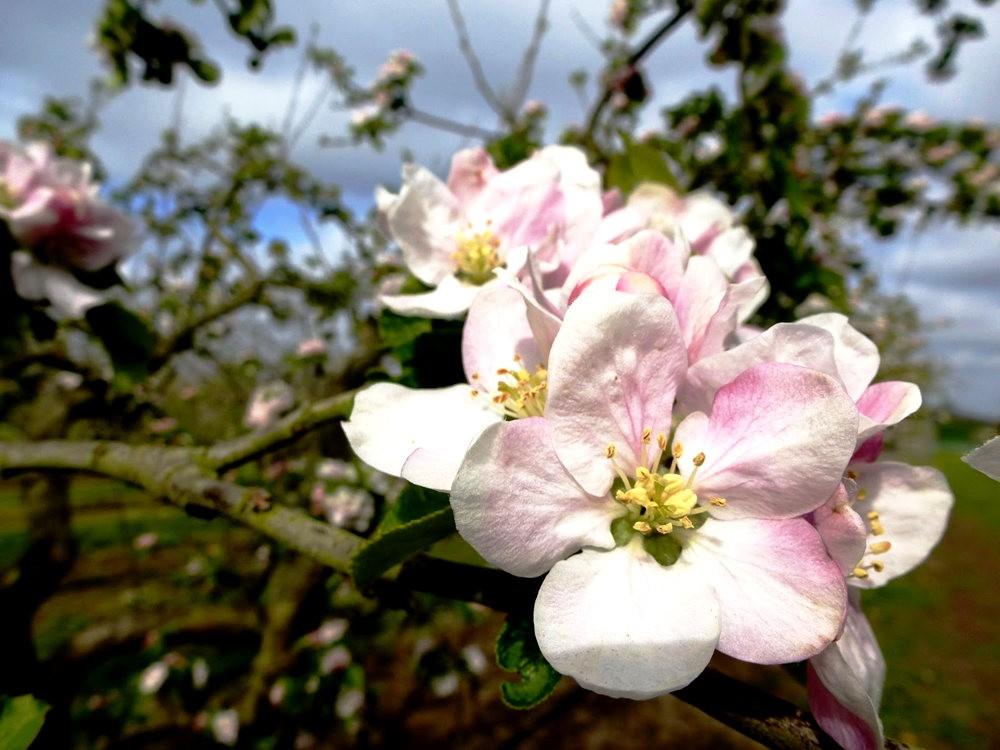 春在邱园_图1-15