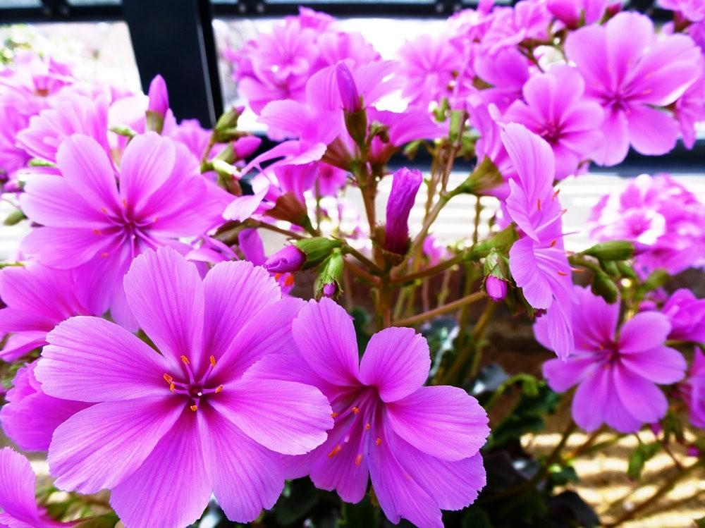 春在邱园_图1-25