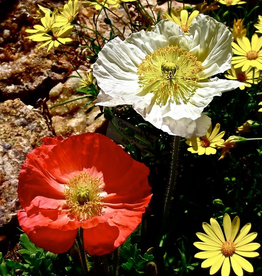 图森植物园在春季_图1-1