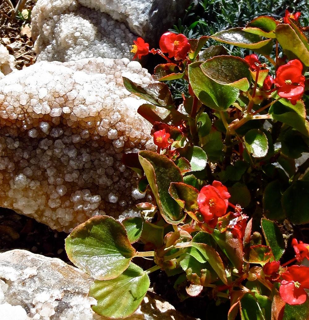 图森植物园在春季_图1-3