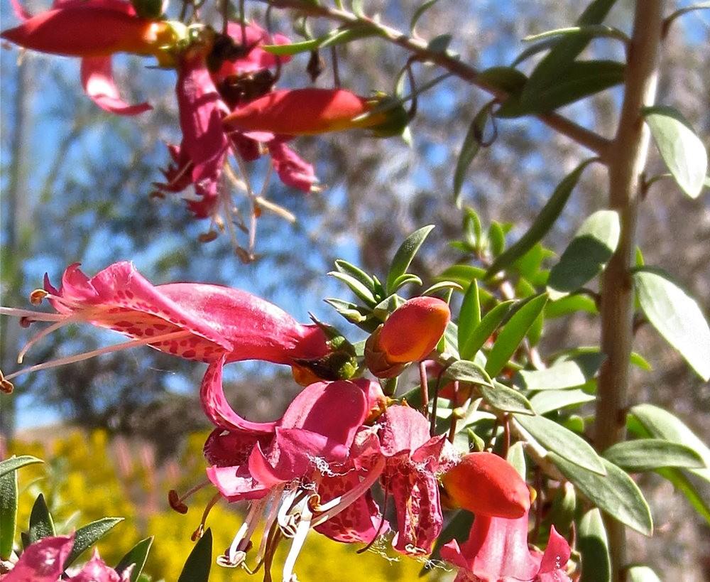 图森植物园在春季_图1-5