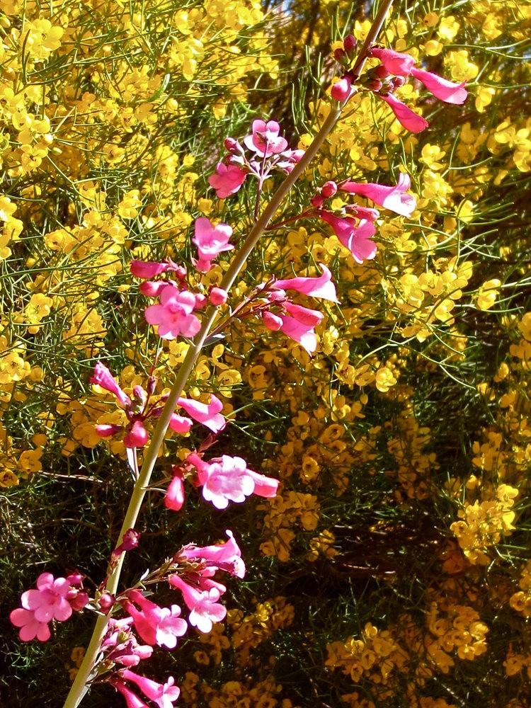 图森植物园在春季_图1-6