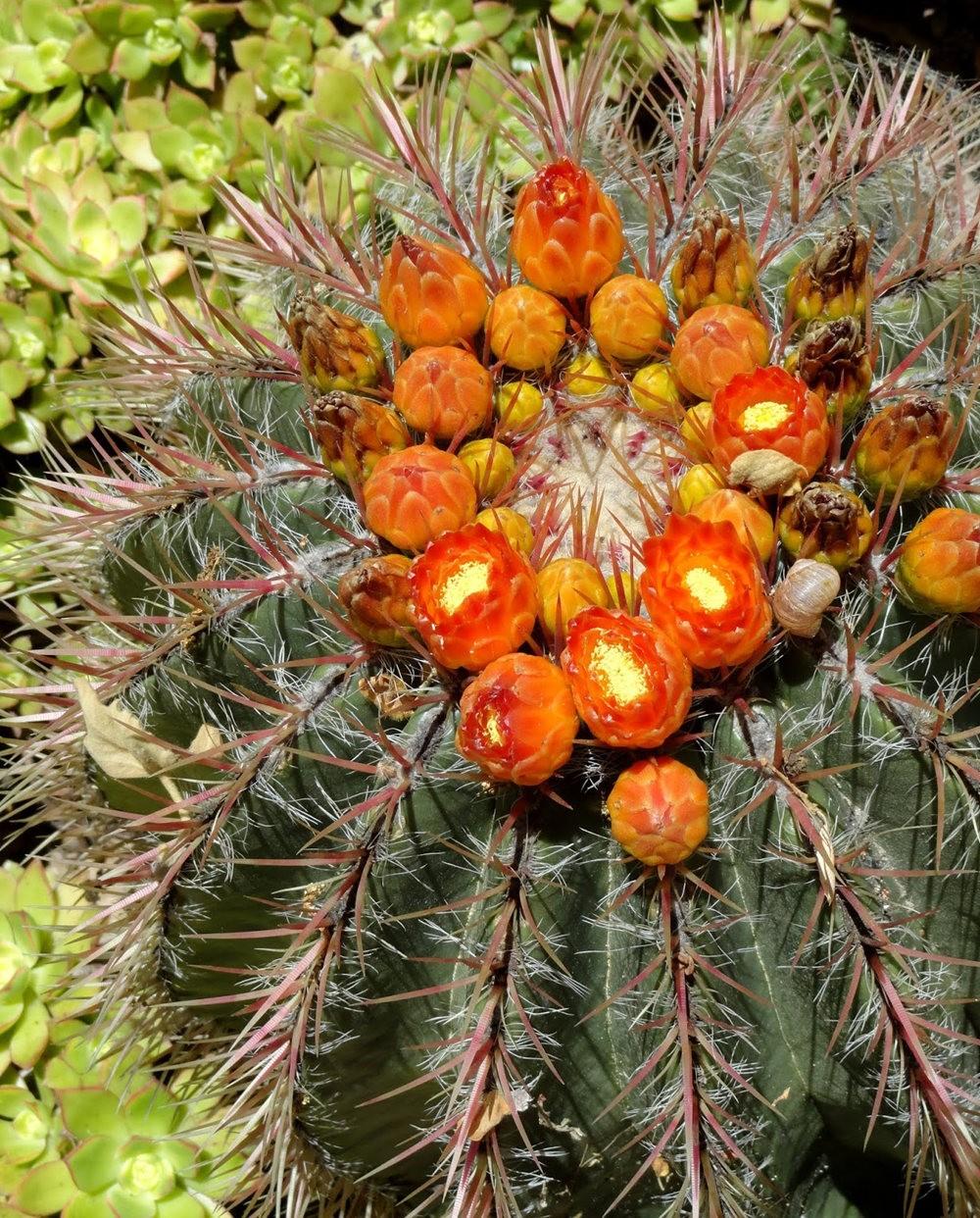 图森植物园在春季_图1-12