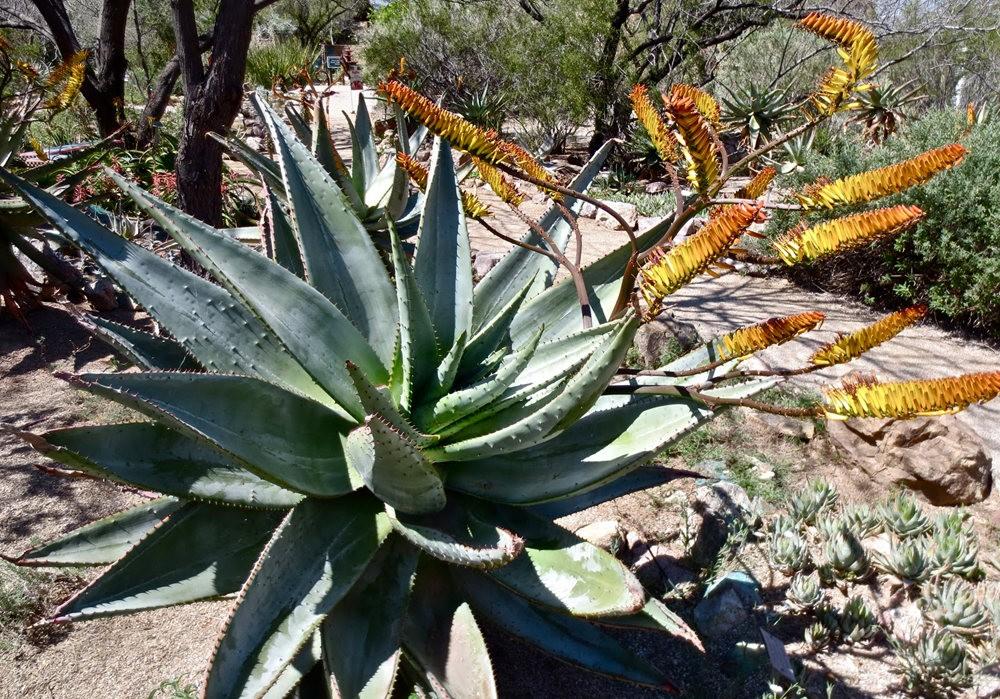 图森植物园在春季_图1-14