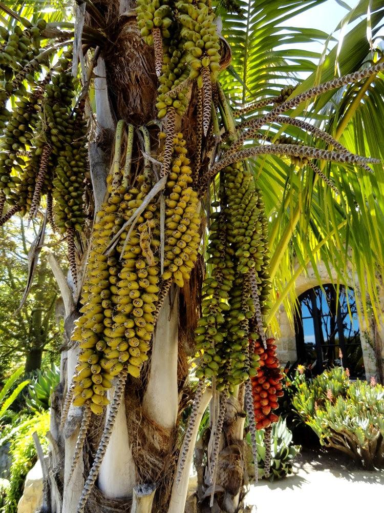 图森植物园在春季_图1-15