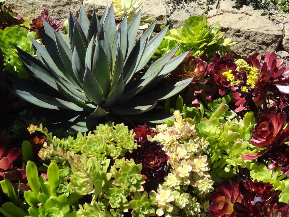 图森植物园在春季_图1-16