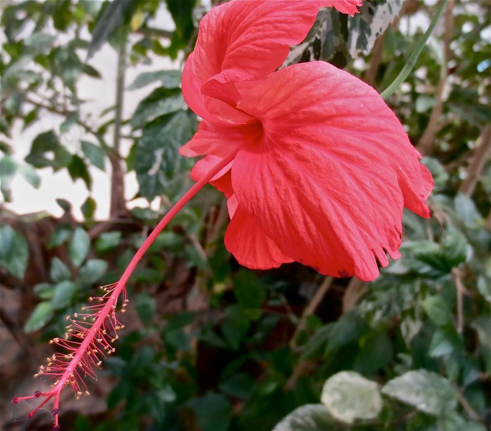 图森植物园在春季_图1-17