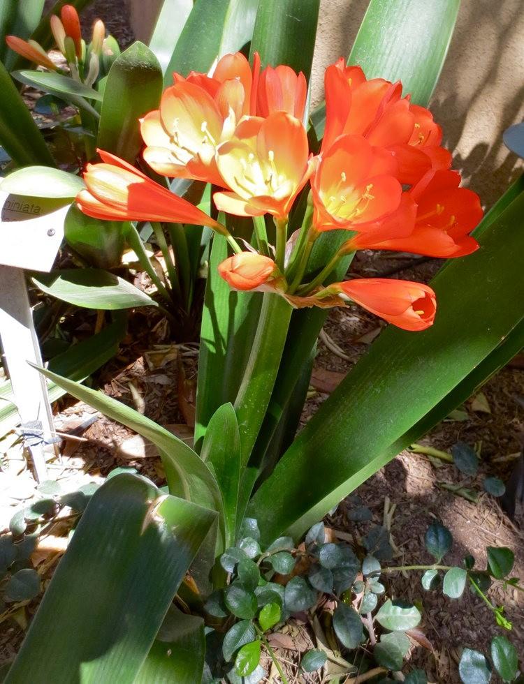 图森植物园在春季_图1-19