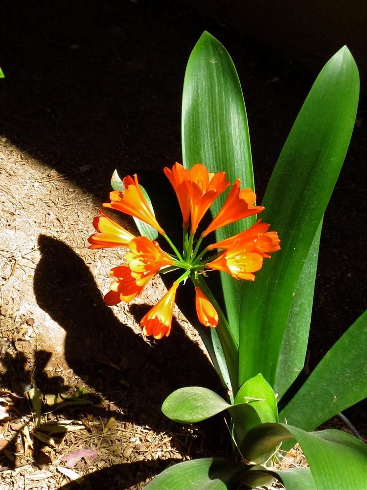 图森植物园在春季_图1-20