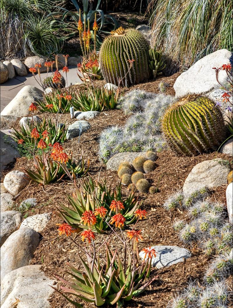 亨廷顿沙漠花园的新面目_图1-28