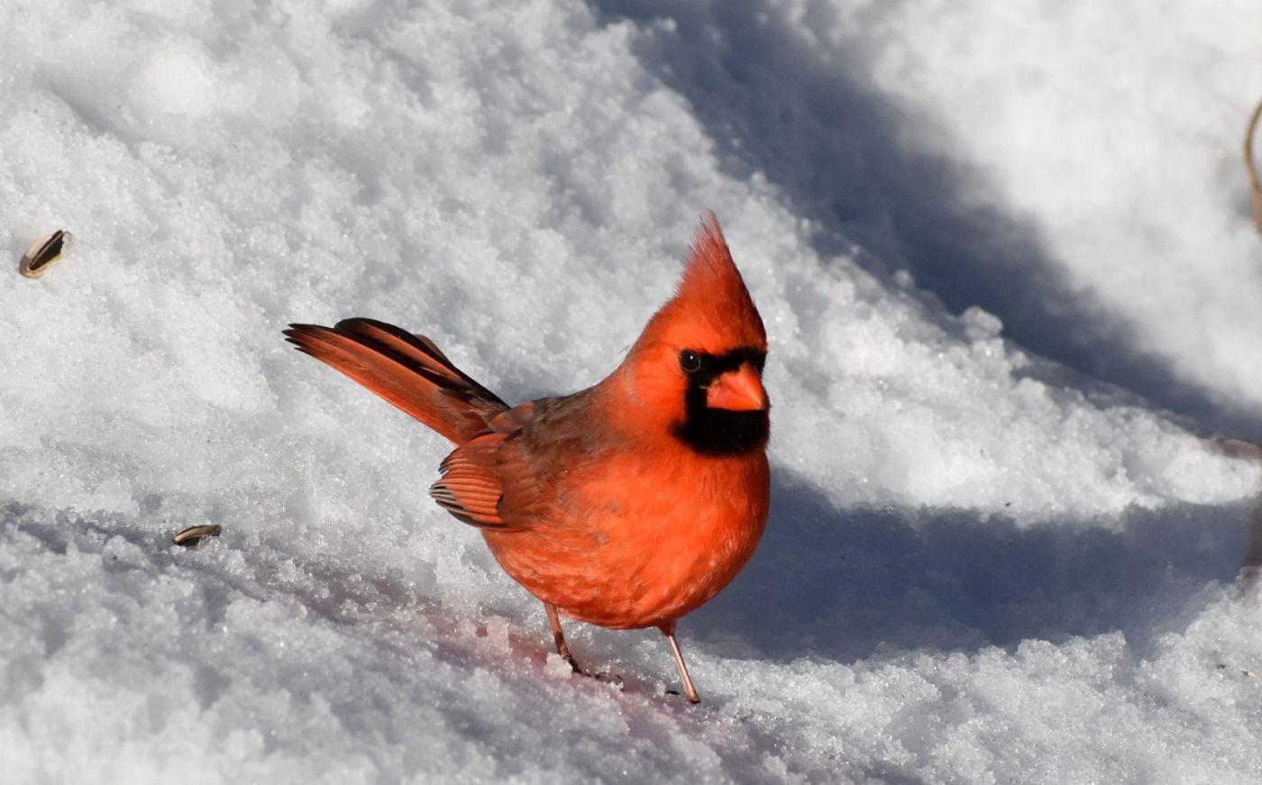 雪后鸟儿忙觅食_图1-8