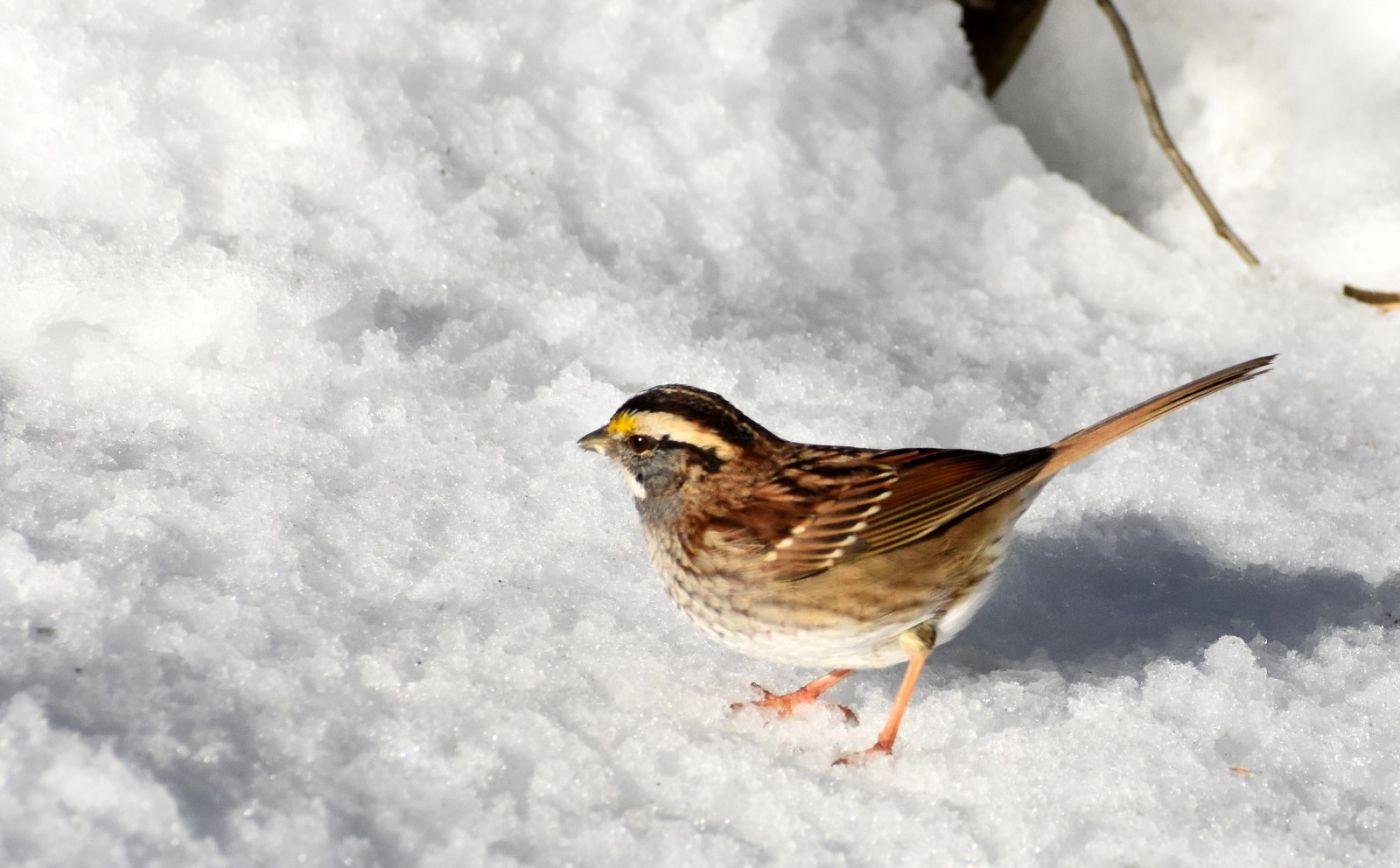 雪后鸟儿忙觅食_图1-20
