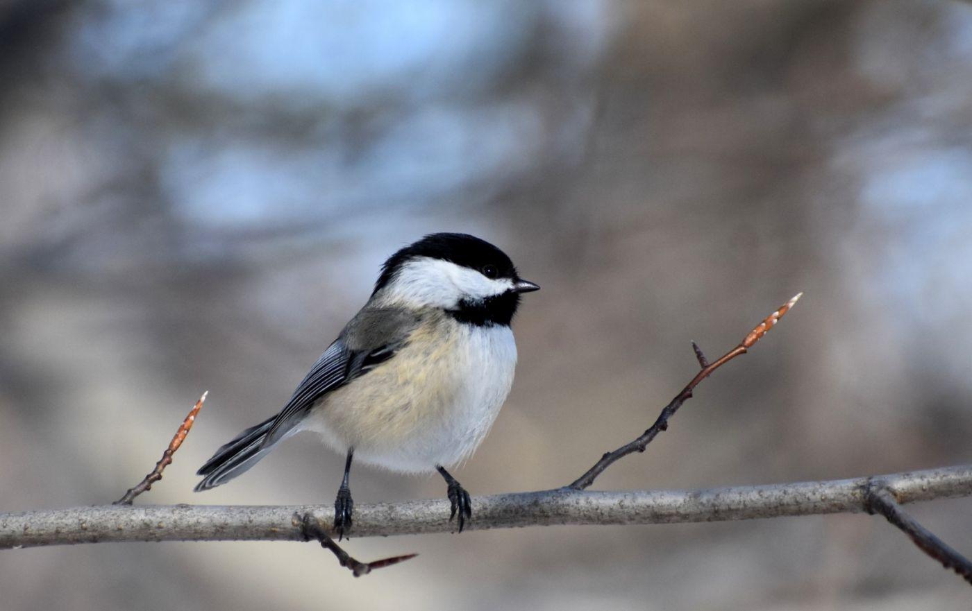雪后鸟儿忙觅食_图1-22