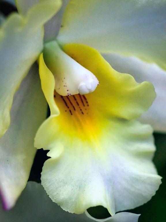 兰花,芯中的爱_图1-12