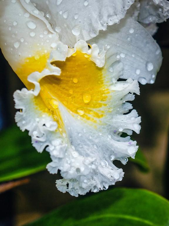 兰花,芯中的爱_图1-3