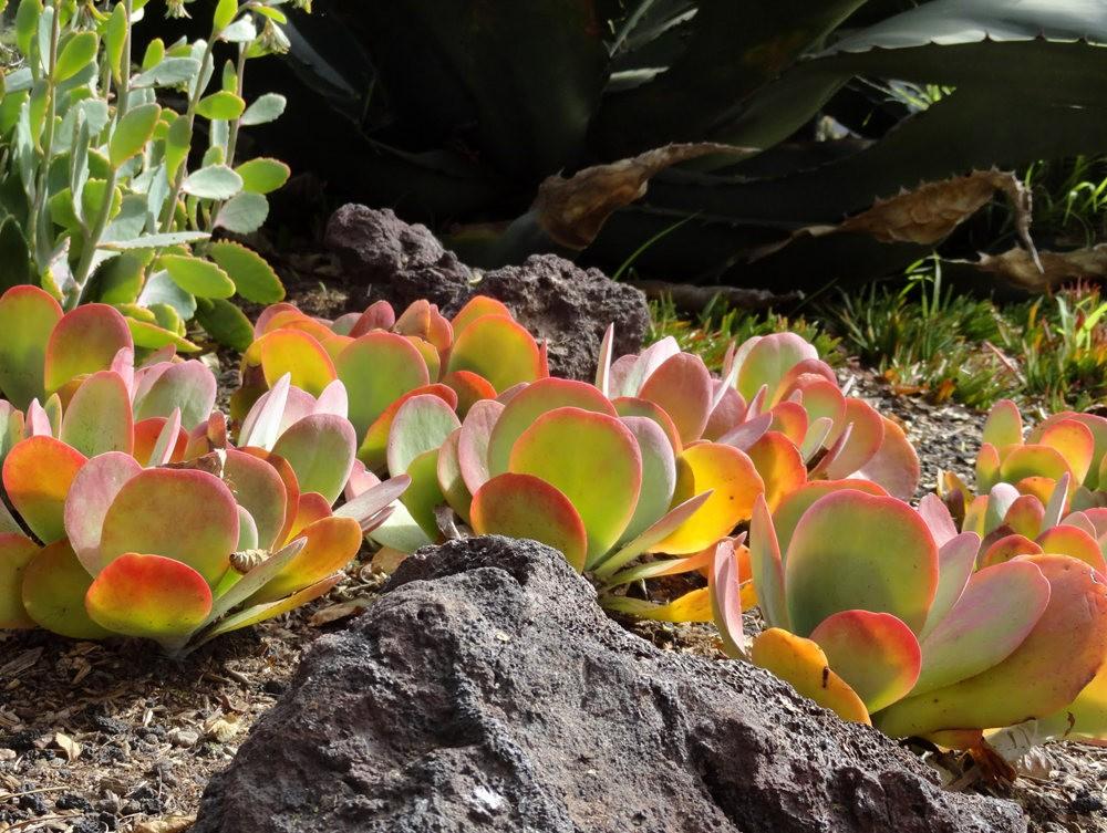 亨廷顿沙漠花园之-桨叶和仙人球_图1-2