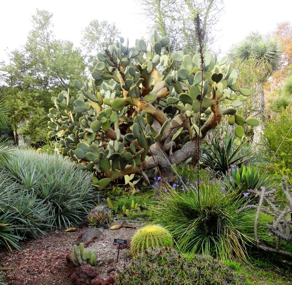 亨廷顿沙漠花园之-桨叶和仙人球_图1-10