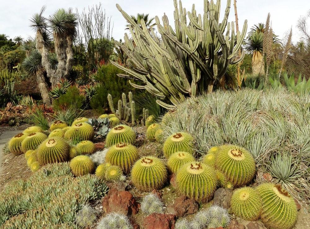 亨廷顿沙漠花园之-桨叶和仙人球_图1-14