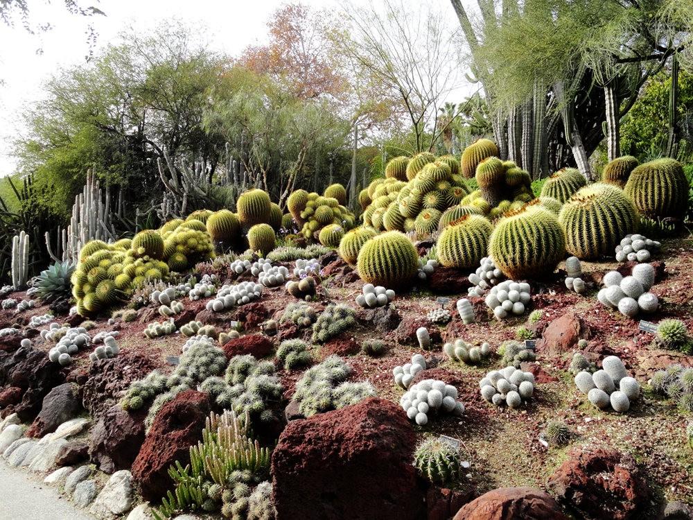 亨廷顿沙漠花园之-桨叶和仙人球_图1-15