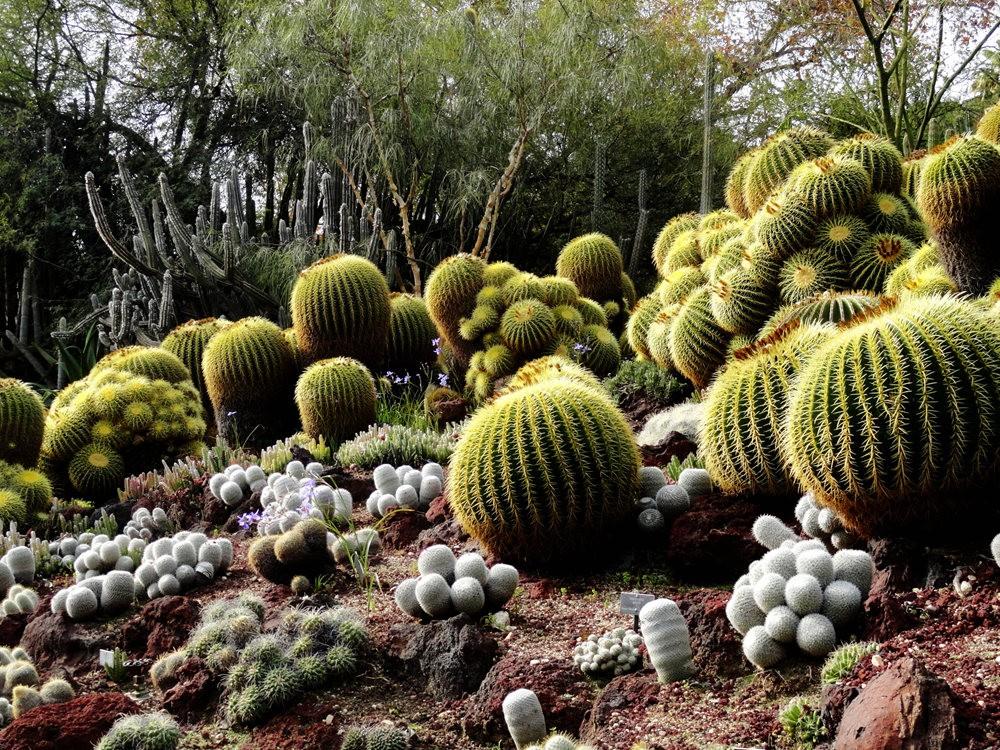 亨廷顿沙漠花园之-桨叶和仙人球_图1-16