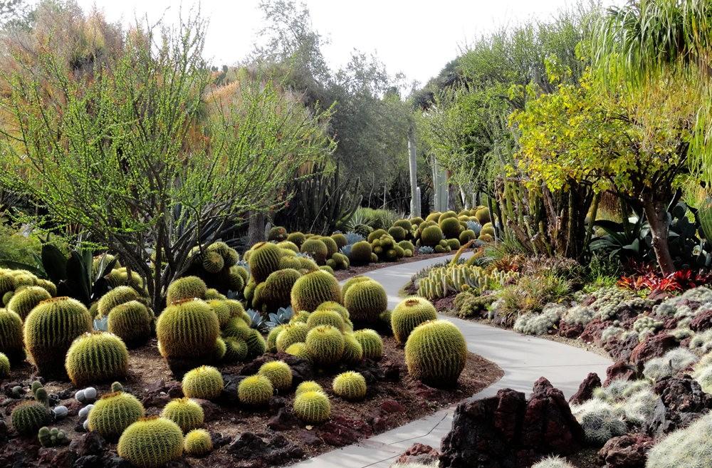 亨廷顿沙漠花园之-桨叶和仙人球_图1-18