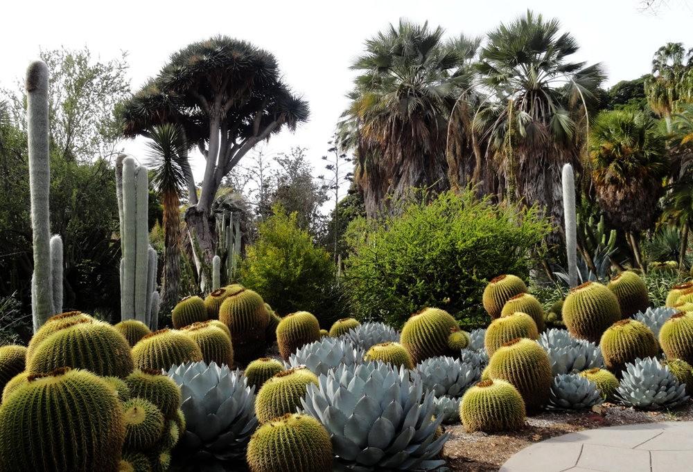 亨廷顿沙漠花园之-桨叶和仙人球_图1-19