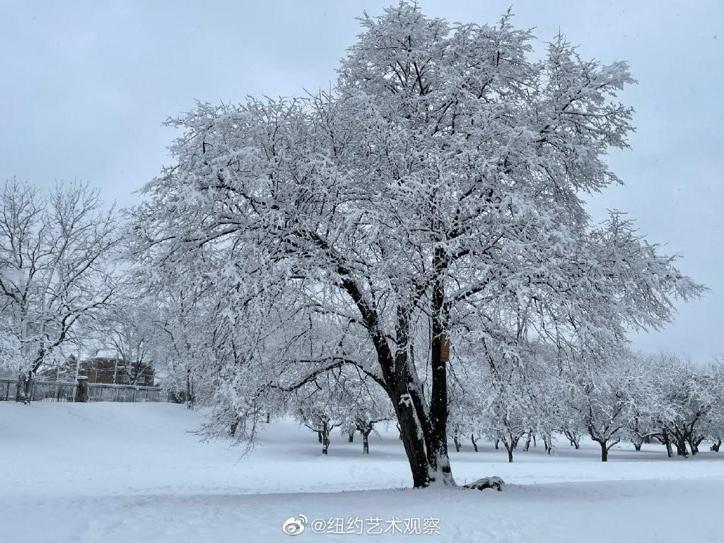 纽约法拉盛,千树万树雪花开_图1-11