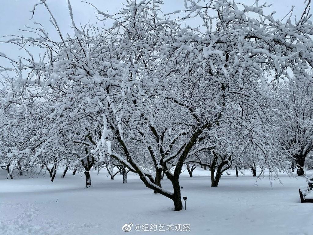 纽约法拉盛,千树万树雪花开_图1-12