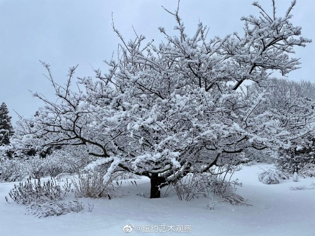 纽约法拉盛,千树万树雪花开_图1-13