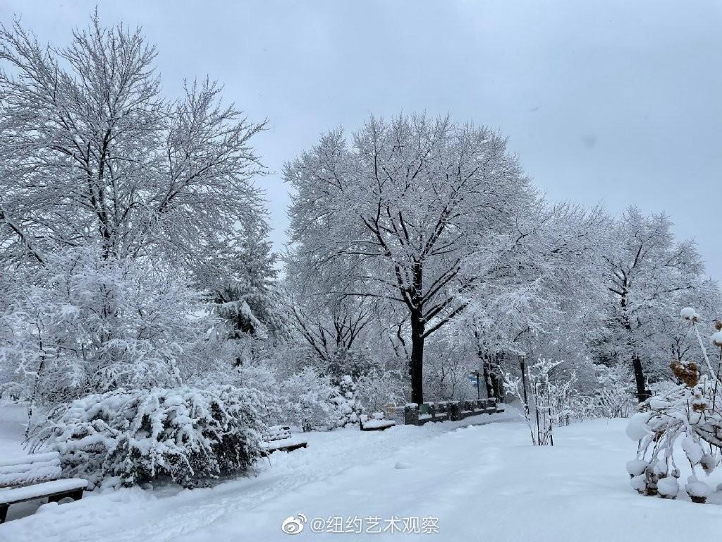 纽约法拉盛,千树万树雪花开_图1-15