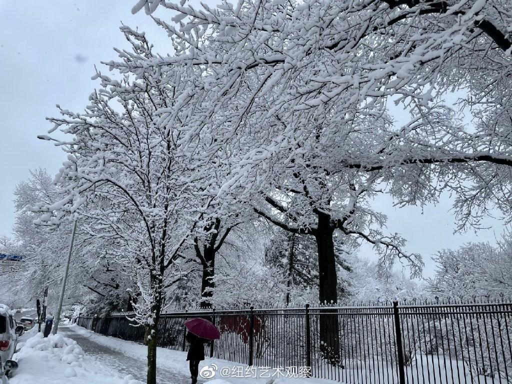 纽约法拉盛,千树万树雪花开_图1-2