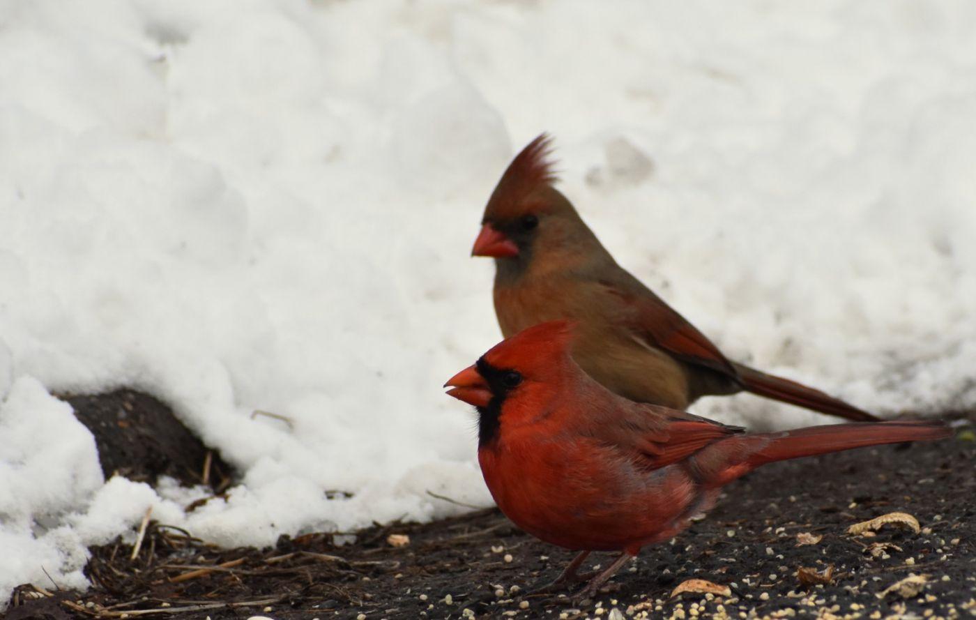 红鸟迎新春_图1-28