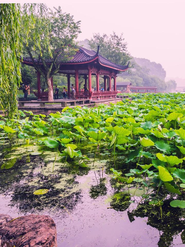 杭州西湖,荷花轻舟柳树_图1-1