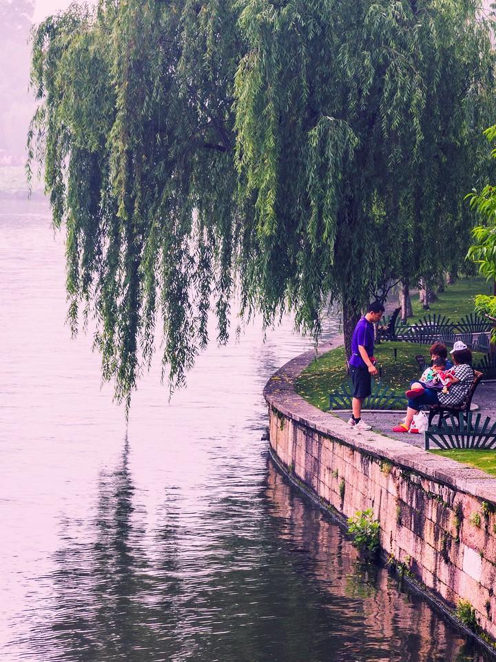 杭州西湖,荷花轻舟柳树_图1-15