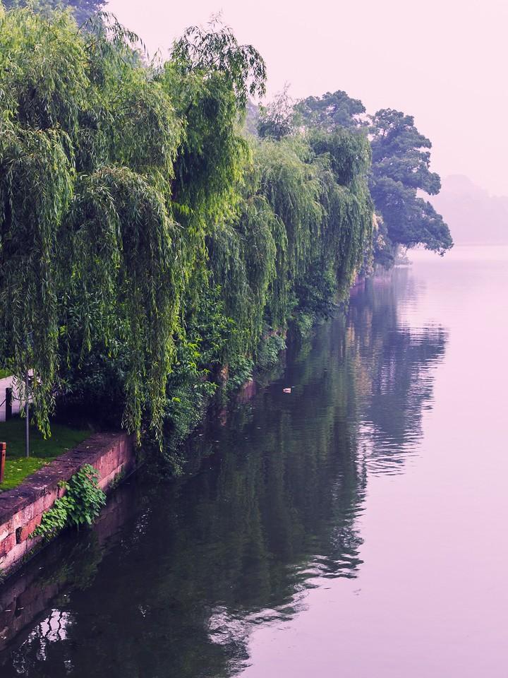 杭州西湖,荷花轻舟柳树_图1-16