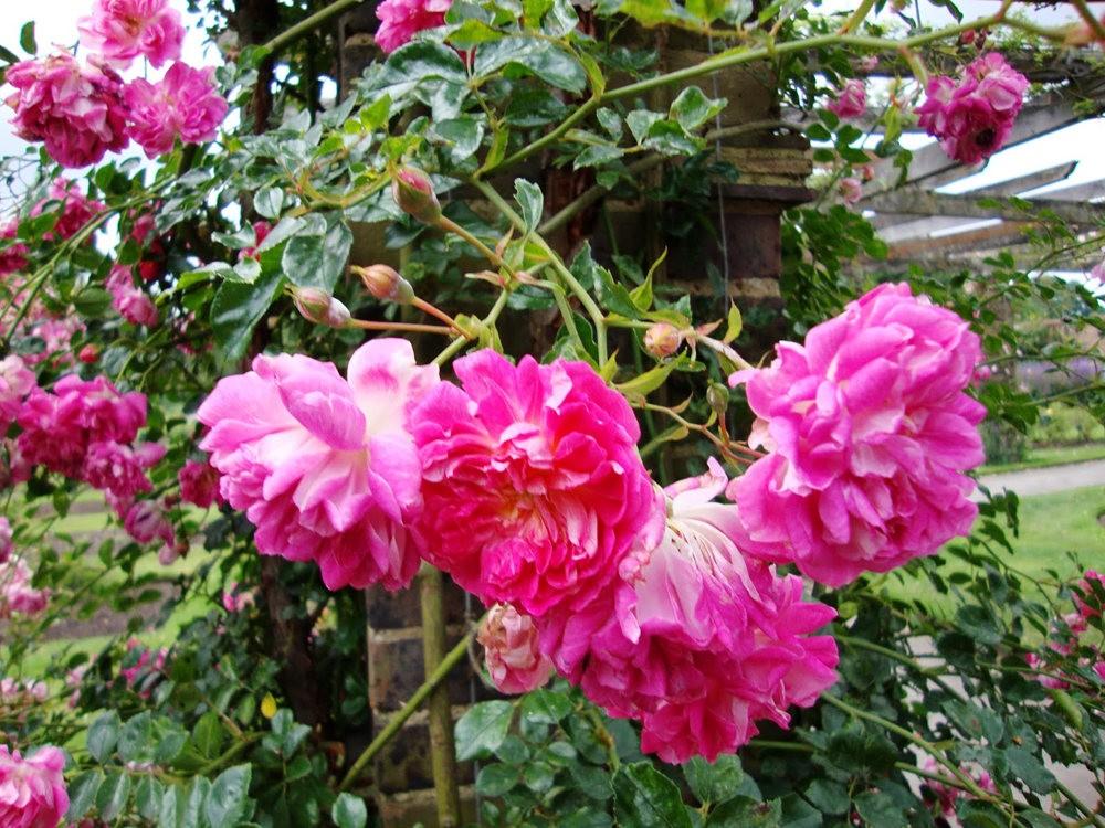 邱园中的植物与花卉_图1-2